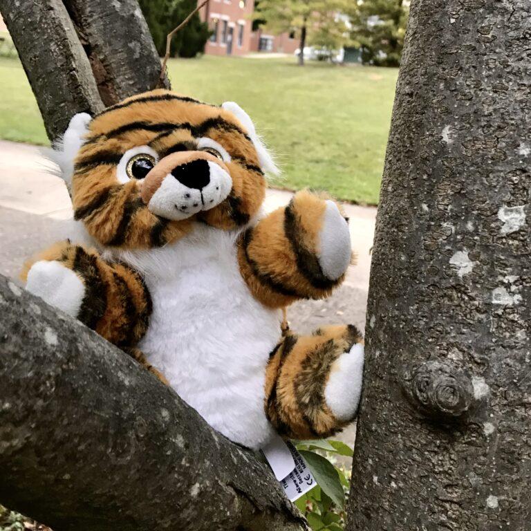 Photos: Build-A-Tiger