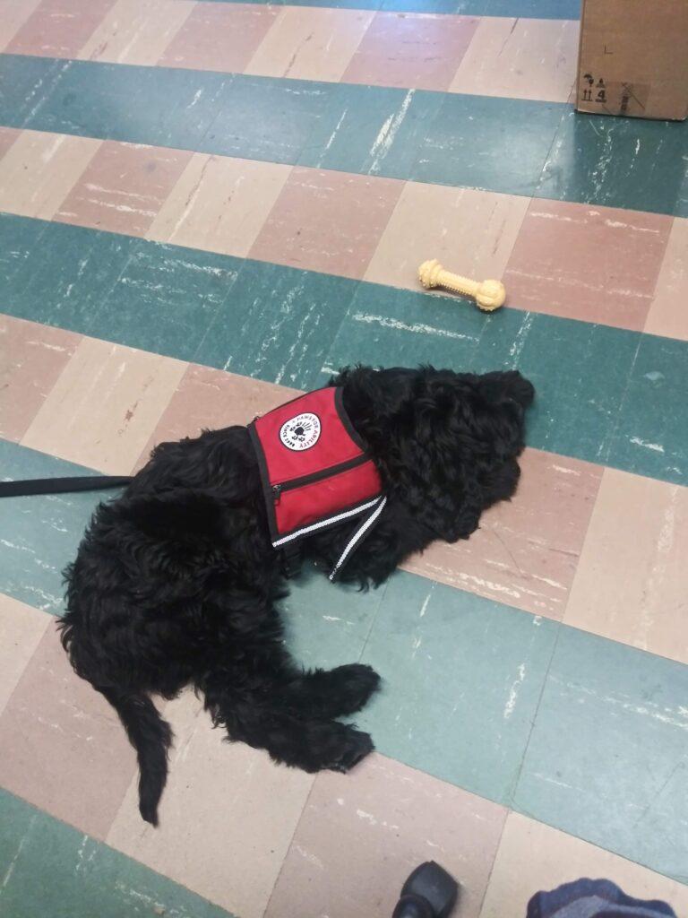 4PAWs Pup of the Semester: Zazpi